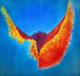 oeuvre de l'artiste SALOMON Sarah Agathe : Bird of Paradise