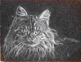oeuvre de l'artiste GENDREAU Joel : Un chat agouti